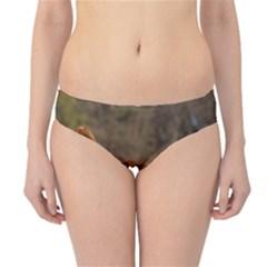 Duck Toller Full Hipster Bikini Bottoms
