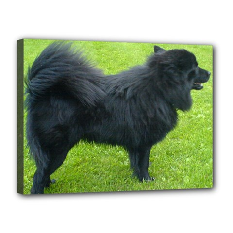 Swedish Lapphund Full Canvas 16  x 12