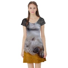 Westy Sleeping Short Sleeve Skater Dress
