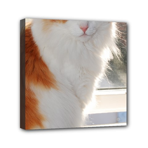 Norwegian Forest Cat Sitting 4 Mini Canvas 6  x 6