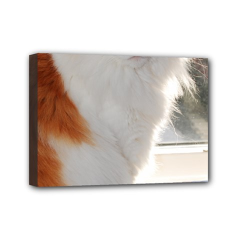 Norwegian Forest Cat Sitting 4 Mini Canvas 7  x 5