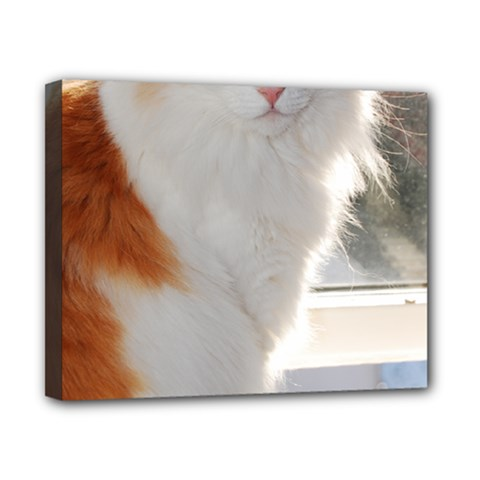 Norwegian Forest Cat Sitting 4 Canvas 10  x 8