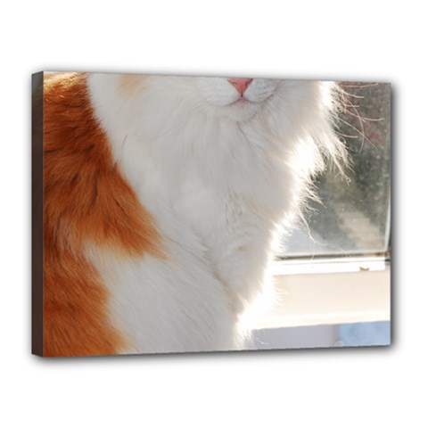 Norwegian Forest Cat Sitting 4 Canvas 16  x 12