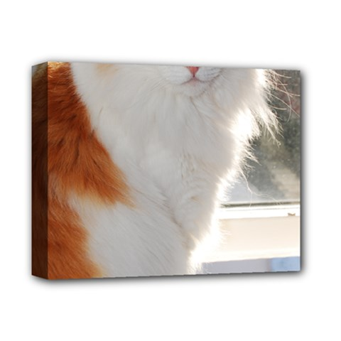 Norwegian Forest Cat Sitting 4 Deluxe Canvas 14  x 11