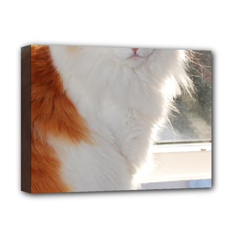Norwegian Forest Cat Sitting 4 Deluxe Canvas 16  x 12