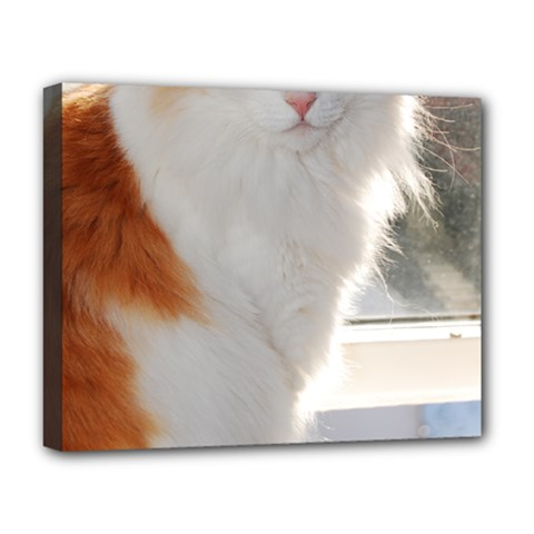 Norwegian Forest Cat Sitting 4 Deluxe Canvas 20  x 16