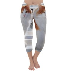 Norwegian Forest Cat Sitting 4 Capri Winter Leggings