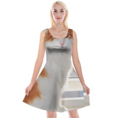 Norwegian Forest Cat Sitting 4 Reversible Velvet Sleeveless Dress