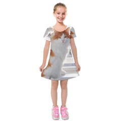 Norwegian Forest Cat Sitting 4 Kids  Short Sleeve Velvet Dress