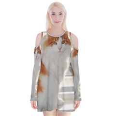 Norwegian Forest Cat Sitting 4 Velvet Long Sleeve Shoulder Cutout Dress
