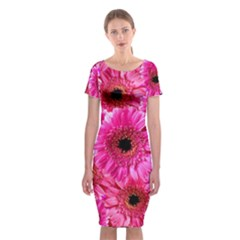 Gerbera Flower Nature Pink Blosso Classic Short Sleeve Midi Dress
