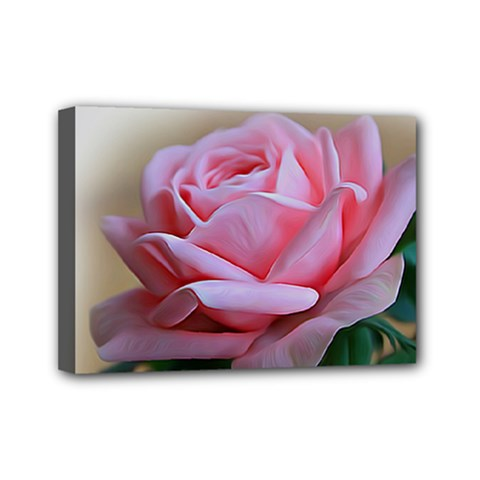 Rose Pink Flowers Pink Saturday Mini Canvas 7  X 5