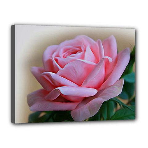 Rose Pink Flowers Pink Saturday Canvas 16  X 12