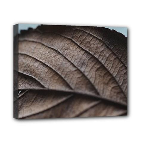 Leaf Veins Nerves Macro Closeup Canvas 10  X 8
