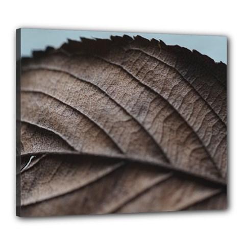 Leaf Veins Nerves Macro Closeup Canvas 24  X 20
