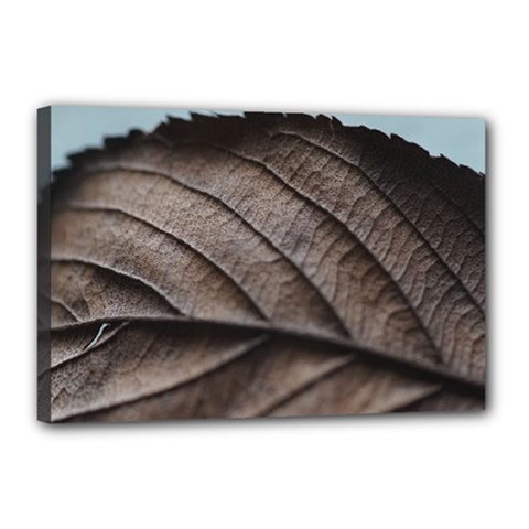 Leaf Veins Nerves Macro Closeup Canvas 18  X 12