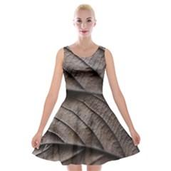 Leaf Veins Nerves Macro Closeup Velvet Skater Dress