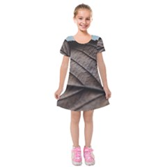 Leaf Veins Nerves Macro Closeup Kids  Short Sleeve Velvet Dress