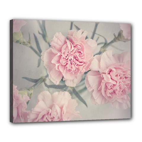 Cloves Flowers Pink Carnation Pink Canvas 20  X 16