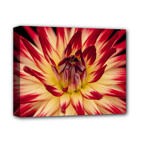 Bloom Blossom Close Up Flora Deluxe Canvas 14  X 11