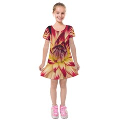 Bloom Blossom Close Up Flora Kids  Short Sleeve Velvet Dress