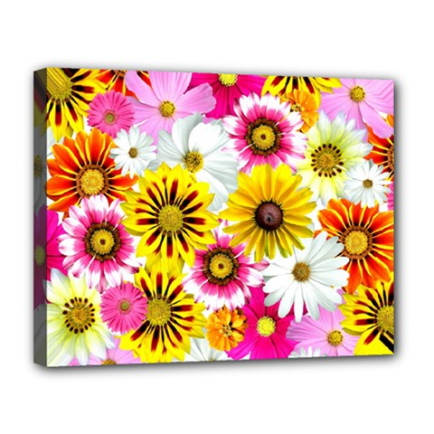 Flowers Blossom Bloom Nature Plant Canvas 14  X 11
