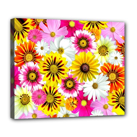 Flowers Blossom Bloom Nature Plant Deluxe Canvas 24  X 20