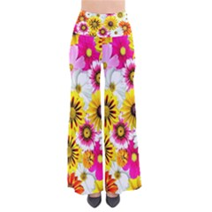 Flowers Blossom Bloom Nature Plant Pants