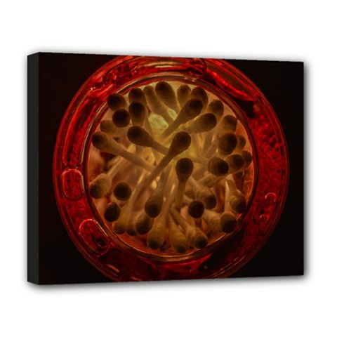 Light Picture Cotton Buds Deluxe Canvas 20  X 16