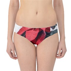 Star Of Bethlehem Star Red Hipster Bikini Bottoms