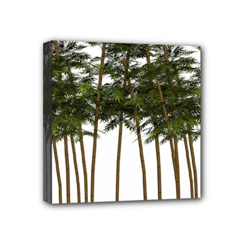 Bamboo Plant Wellness Digital Art Mini Canvas 4  X 4