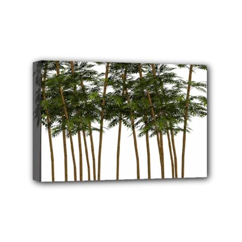 Bamboo Plant Wellness Digital Art Mini Canvas 6  X 4