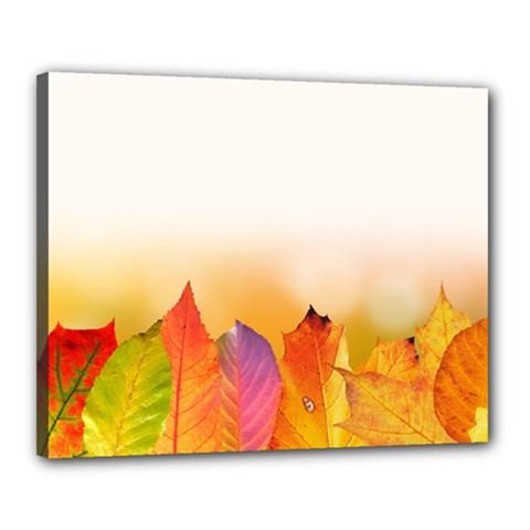 Autumn Leaves Colorful Fall Foliage Canvas 20  X 16