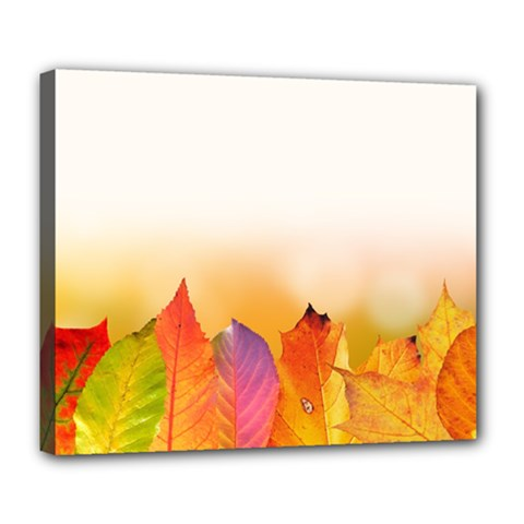 Autumn Leaves Colorful Fall Foliage Deluxe Canvas 24  X 20