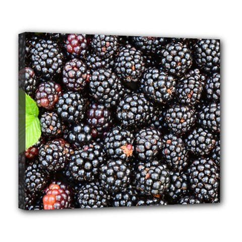 Blackberries Background Black Dark Deluxe Canvas 24  X 20