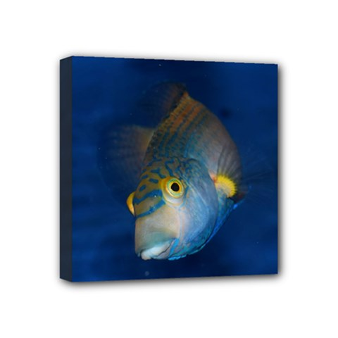 Fish Blue Animal Water Nature Mini Canvas 4  X 4