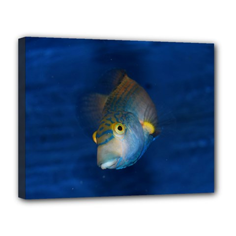 Fish Blue Animal Water Nature Canvas 14  X 11