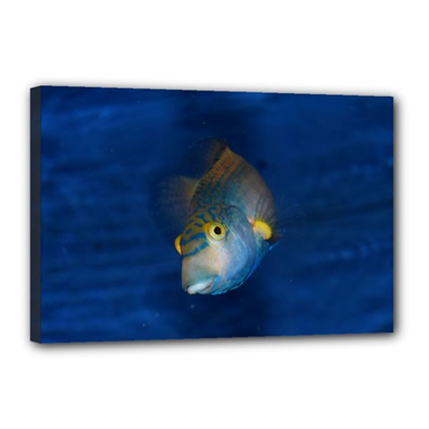 Fish Blue Animal Water Nature Canvas 18  X 12