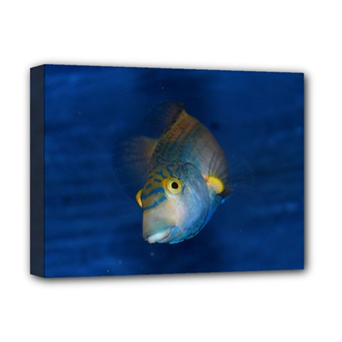 Fish Blue Animal Water Nature Deluxe Canvas 16  X 12