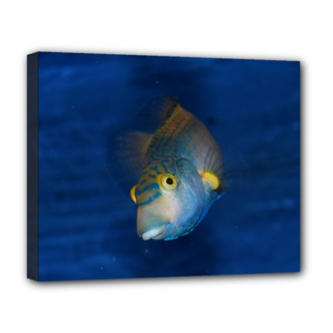 Fish Blue Animal Water Nature Deluxe Canvas 20  X 16