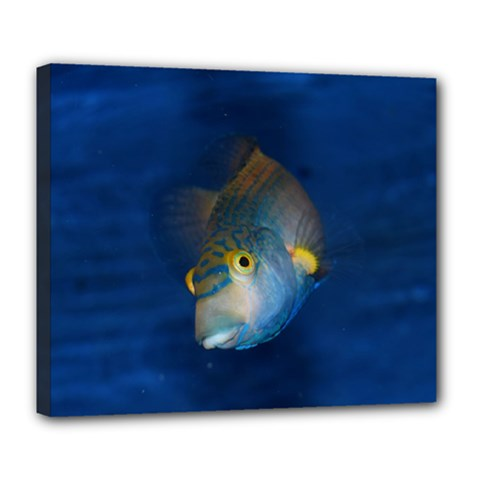 Fish Blue Animal Water Nature Deluxe Canvas 24  X 20