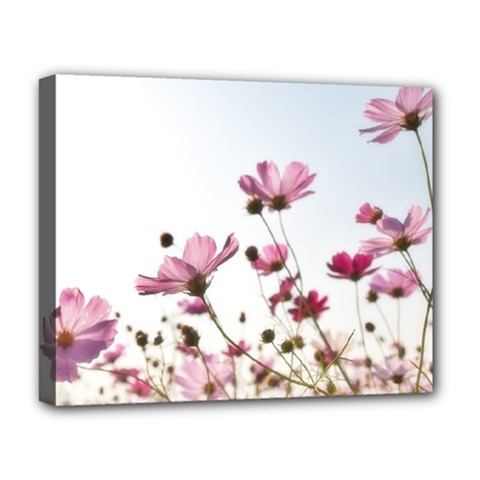 Flowers Plants Korea Nature Deluxe Canvas 20  X 16