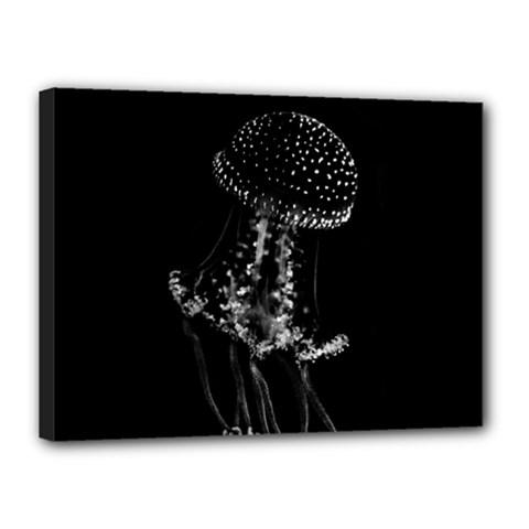 Jellyfish Underwater Sea Nature Canvas 16  x 12