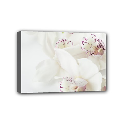 Orchids Flowers White Background Mini Canvas 6  X 4