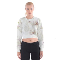 Orchids Flowers White Background Women s Cropped Sweatshirt