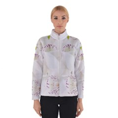 Orchids Flowers White Background Winterwear