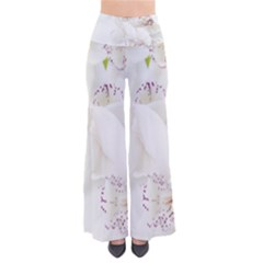 Orchids Flowers White Background Pants