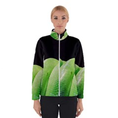 Green Tree Python Winterwear
