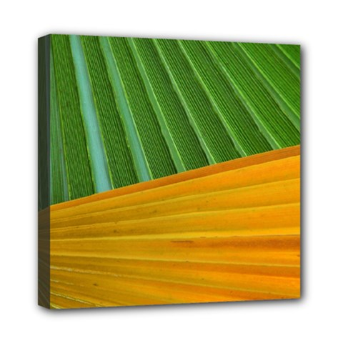 Pattern Colorful Palm Leaves Mini Canvas 8  X 8