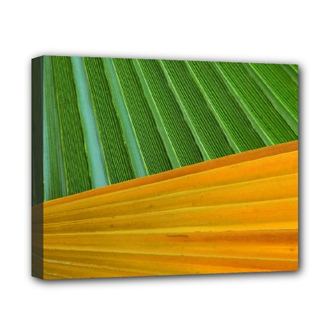 Pattern Colorful Palm Leaves Canvas 10  X 8